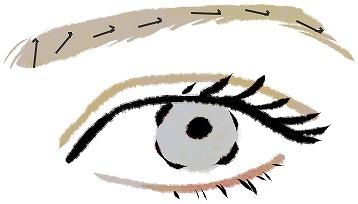 眉毛の生える向き